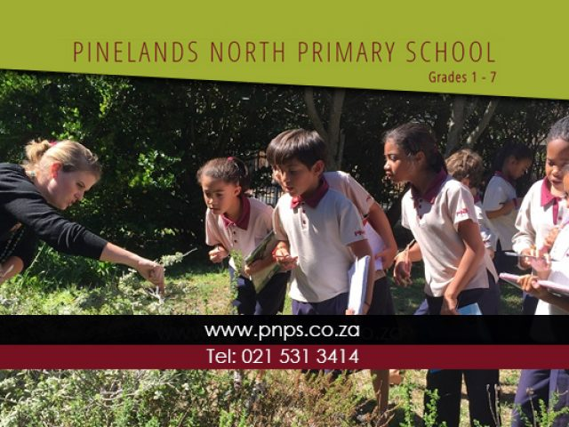 Pinelands North Primary School